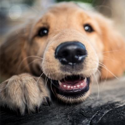 Dog Day Care in Humble & Atascocita
