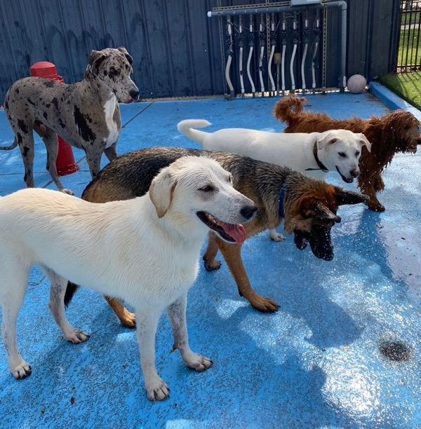 Obedience Training for dogs in Humble Texas